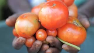 """يقدم هذا الفيديو القصير لمحة عامة عن أنشطة واختصاصات منظمة الأمم المتحدة للأغذية والزراعة (فاو). ويقول جوزيه غرازيانو دا سيلفا المدير العام للمنظمة، أن""""منظمة..."""