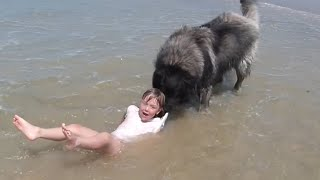 Dog Decides to Rescue Girl Playing in Ocean