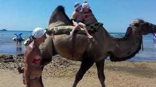 На пляжах Чёрного моря в Анапе .