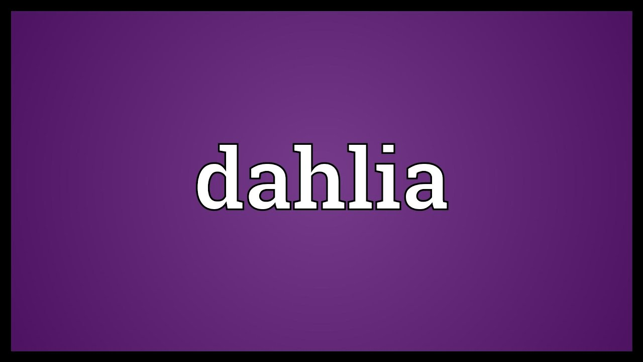 Dahlia Meaning Youtube