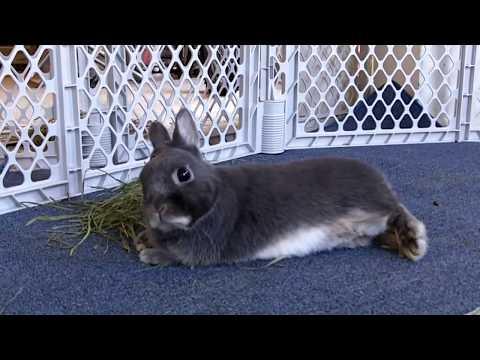 Декоративные кролики отжигают)