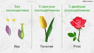 """Видеоурок по биологии """"Цветок и его строение"""""""