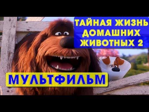 Тайная жизнь домашних животных мультфильм 3d