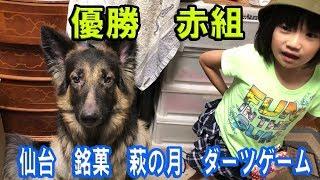 grandchild and German Shepherd dog 大型犬ジャーマンシェパード犬と子...