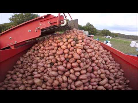 Raccolta patate 2016 New Holland-Fiat-Same-Grimme SE 70-20 AgriMatteo99HD [GoPro]