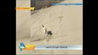 Бродячие собаки загрызли жеребёнка в одном из ангарских садоводств