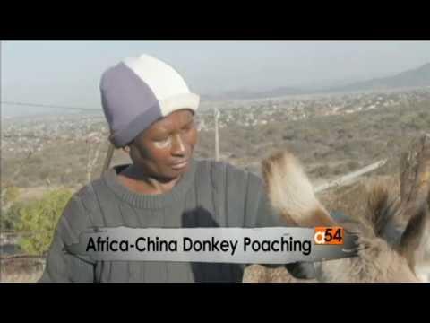 Donkey Poaching in Africa