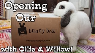 BudgetBunny: Opening Our Bunny Box With Ollie & Willow thumbnail
