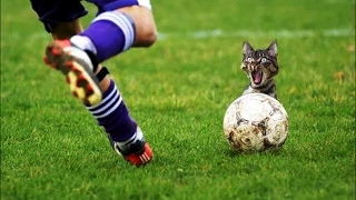 BEST funny moments in sport | BEST funny fails