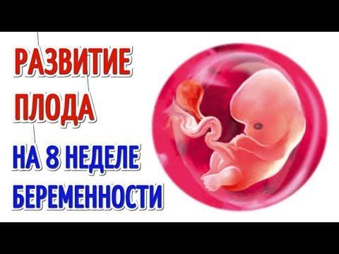 Развитие плода на 8 неделе беременности!