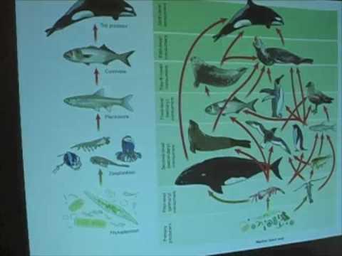 Ocean Food Webs - Food Chains Vs Food Webs