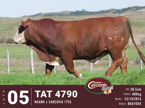 LOTE 05 - TAT 4790