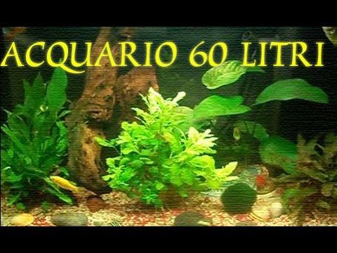 Acquario pesci rossi youtube for Razze di pesci rossi