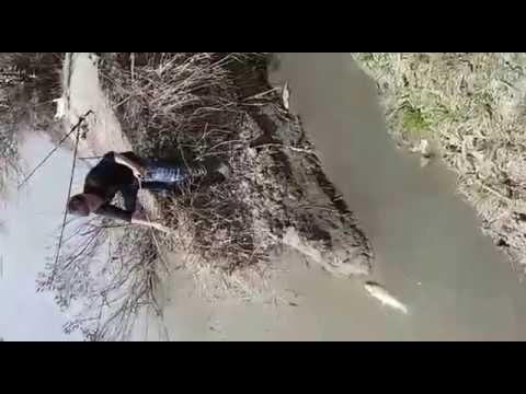 Рыбалка на Тереке. Кутум