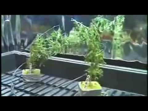 Mr Green How To Build A Basic Indoor Weed Grow Room Step