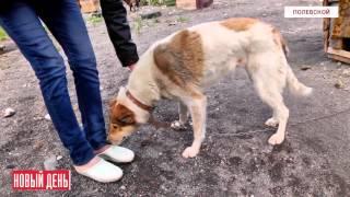 В приюте для собак питомцы умирают по непонятной причине(Видеоновости РИА