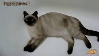 Что Любит Кот Гарольд ✦ Приколы Про Кошек ✦ Funny cats ✦ What a Garfield Cat Loves ✦ LUCKY