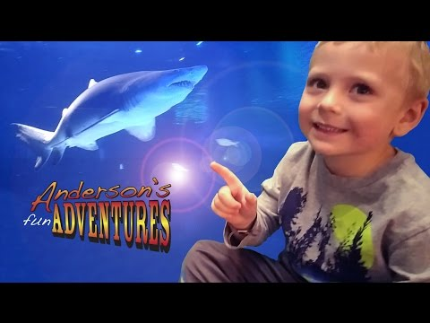 Newport Aquarium Sharks, Shark Bridge and Even More Sharks - Anderson's Fun Adventures E8
