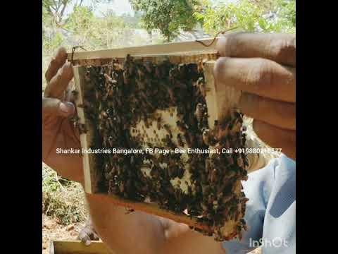 BeeKeeping (English)