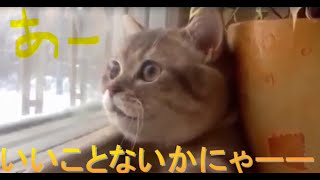 超かわいいwww おもしろ猫動画 笑える総集編 Funny Cat Funny Cats F...