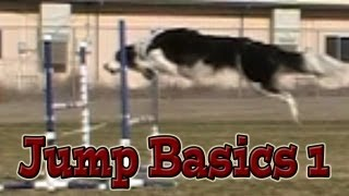 Jumping Basics 1: Agility Dog Training (susan Salo Exercise)