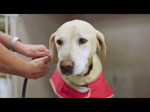Our Biosecurity Detector Dogs Safeguarding Australia