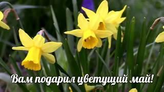 Видео поздравление с 1 мая  поздравление на 1 мая в стихах
