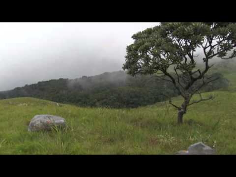 Stock Footage For Sale - Limpopo Province South Africa - HDV