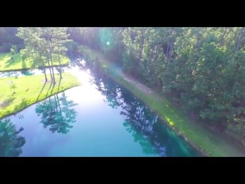 Alligator filmed with drone. Awesome video