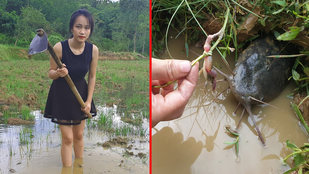 Beautiful Girl Daily- Catch Fish by Frog Trap and Cooking Fish in Home with Father very Delicious