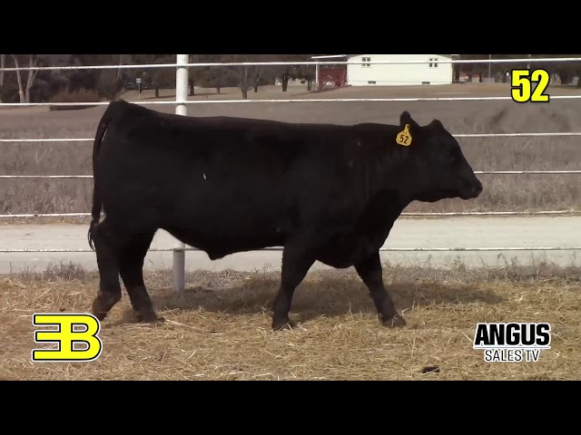 Benoit Angus Ranch Annual Production Sale-Reference Sire Review