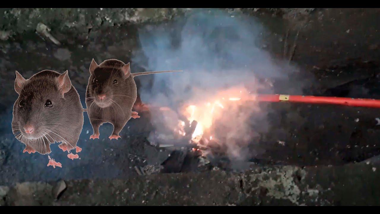 Percobaan Berburu tikus dengan Kembang api Sos Dor saat Hujan