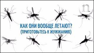 Секреты полёта комаров