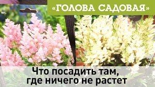Голова садовая - Что посадить там, где ничего не растет