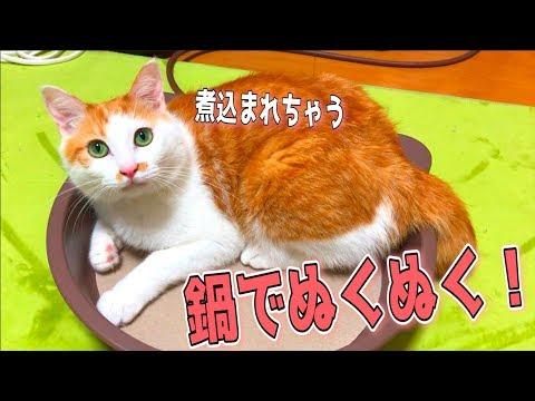 猫用の鍋を買ったのでそのまま猫を煮込んでみたwww