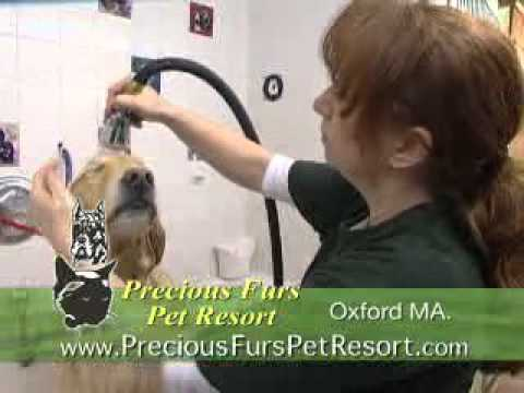 Precious Furs Pet Resort TV Commercial Oxford, MA