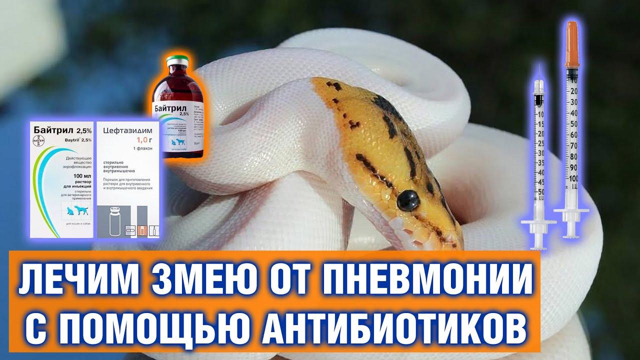 Лечение рептилий от пневмонии — Как вылечить змею от пневмонии уколами антибиотиков