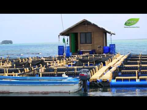Sea Farming di Kepulauan Seribu