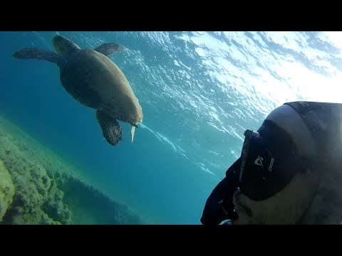 Spearfishing with my buddy the sea turtle (Paros island August 2017)