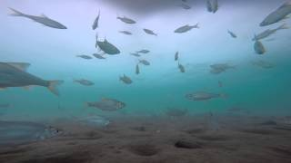 Речной аквариум. подлёдные съёмки. р.Ангара.Иркутск