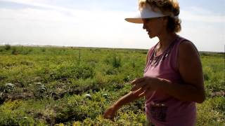 Как правильно выбрать арбуз / www.kengarags.ru(Астраханская предпринимательница, глава фермерского хозяйства, специализирующегося на выращивании арбуз..., 2011-08-17T09:17:18.000Z)