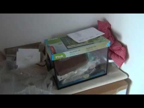 Pyres Lustige Ameisen Teil 65 Ameisen Mittwoch Video Ideen Fur