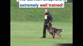 BEST TRAINED GERMAN SHEPHERD(DOG)