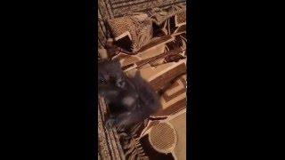 Маленький клубок счастья серенький дымчатый котёнок