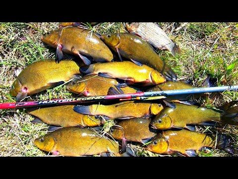 Рыбалка на линя! Зверюга линь украл удочку! +Конкурс!