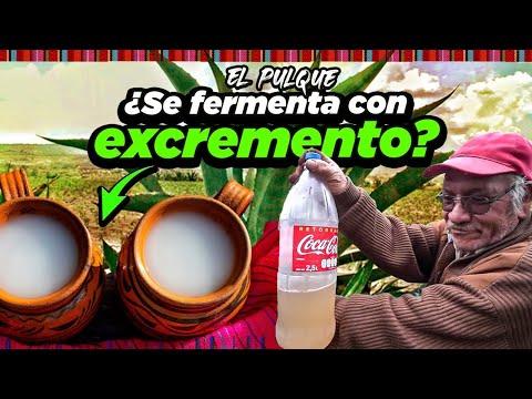 El PULQUE Mexicano ¿Se fermenta con EXCREMENTO?