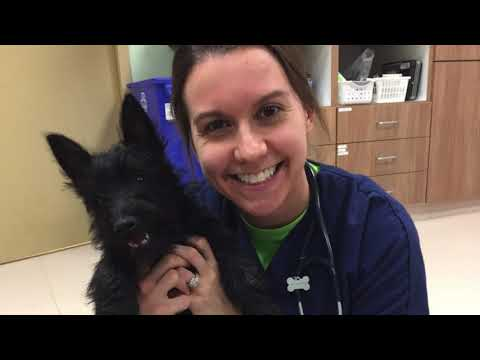 Our Veterinary Team | St  Matthews Animal Clinic