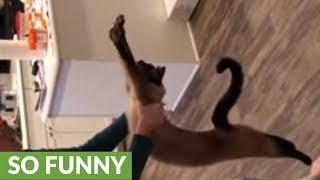 何たる甘え上手!バンザイポーズで抱っこのおねだりをする猫がまた見つかった