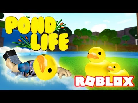 HOW TO BE YELLOW DUCKIES IN ROBLOX! POND LIFE - Role-playing Game Lets Play Kid Friendly Gaming