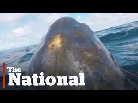 Leatherback Turtles Video Reveals Secret Habits